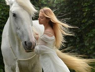 Most Beautiful Arabian Horses In The World اجمل الخيول العربيه في العالم Beautiful Arabian Horses Rare Horses Horses