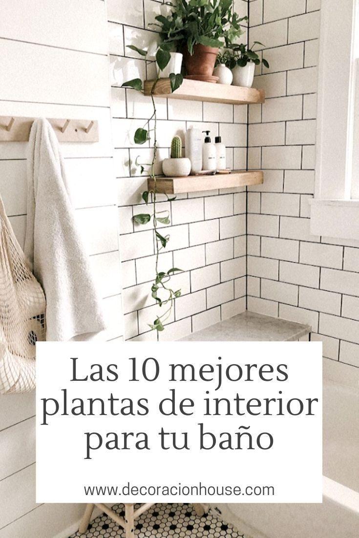 Las 10 mejores plantas de interior para tu baño   Mejores ...