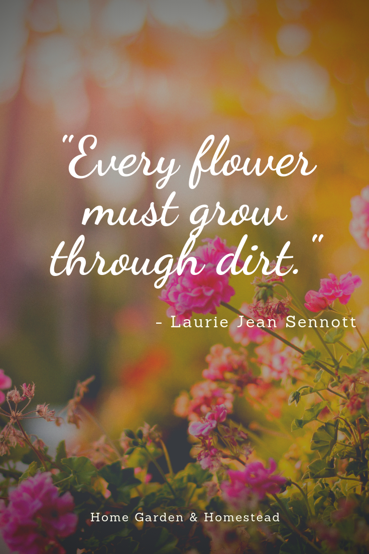 Wise Words 3 Flowers Wisdom Gardenquotes Garden Quotes Gardening Quotes Funny Inspirational Words Of Wisdom