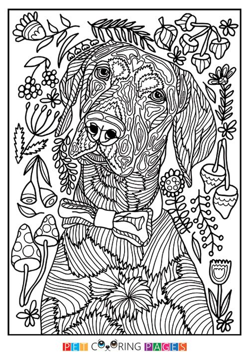Free Printable Pointer Coloring Page Available For Download - pointer animal coloring pages