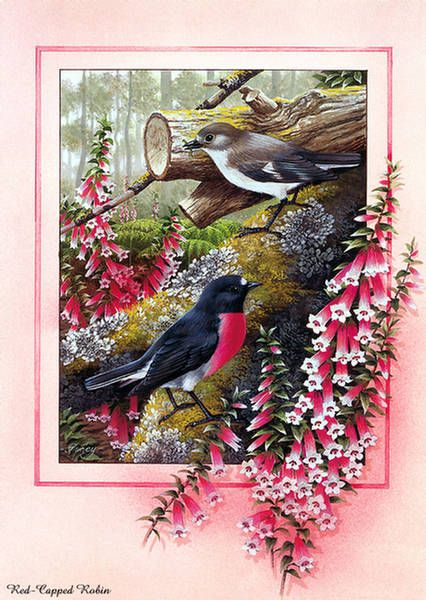 shirley barber birds   ... 8527 post subject beautiful bird paintings beautiful bird paintings