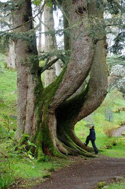 Ardkinglas scotland for Garden trees scotland