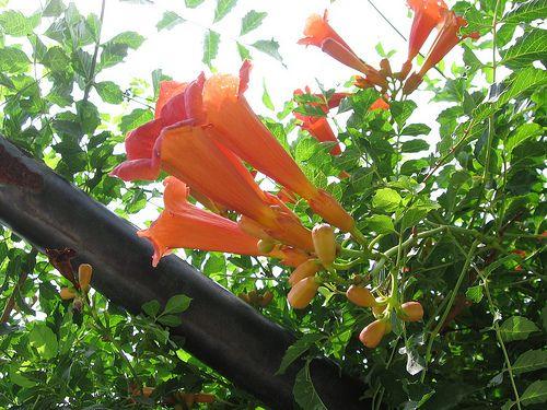 Free Plant Identification Plant identification app