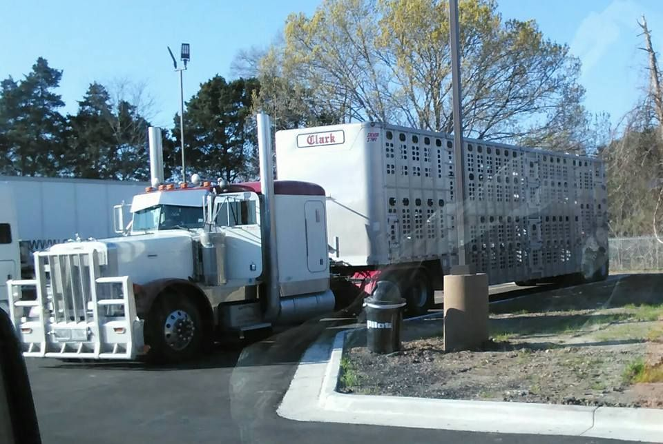 CLARK Bullhauler rest in Texas near Amarillo.