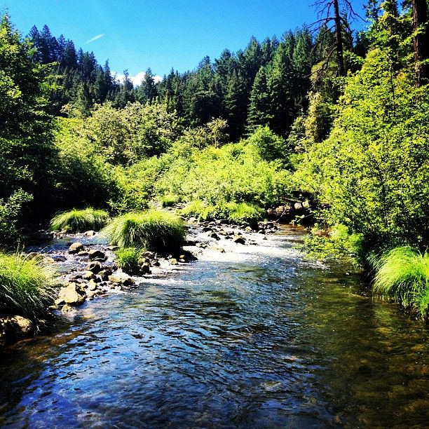 Henry Cowell Redwoods State Park Hiking Waterfalls And Swimming
