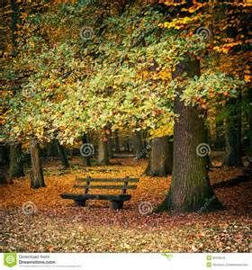benches in the forest -
