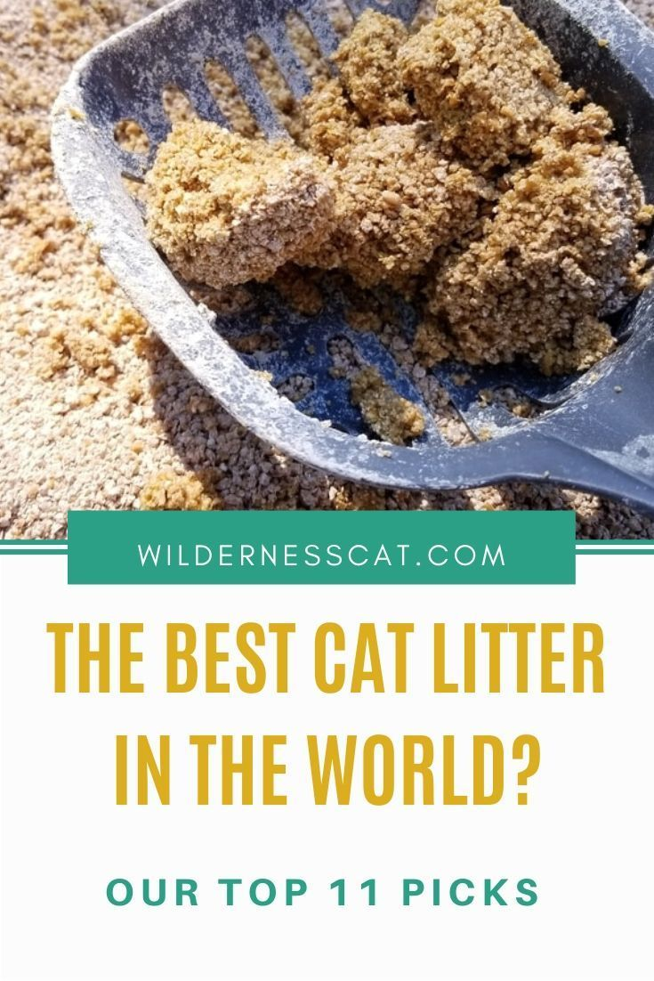 Pin On Cat Products We Ve Tried Reviews