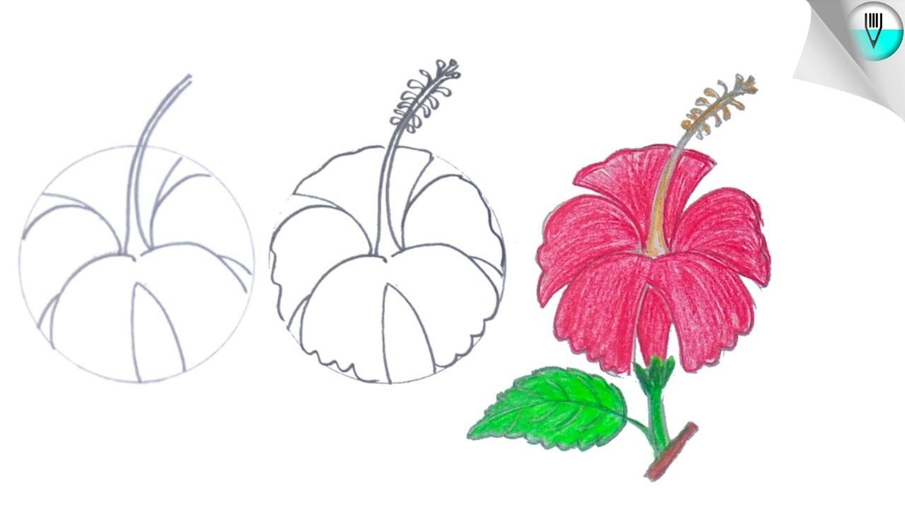 How To Draw A Hibiscus Flower Step By Easy In 2020 Hibiscus