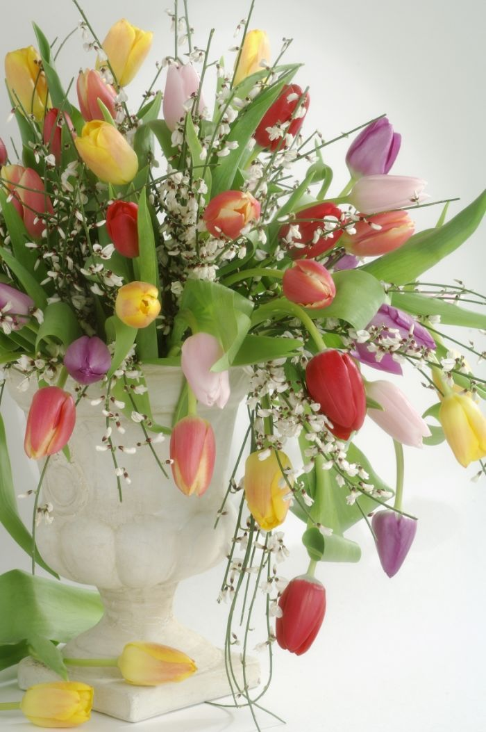 Torbjorn Skogedal - tulip_flower_bouquet_0603047952.JPG