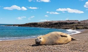 Searching for the remote: Cabo Raso, Patagonia's coastal ghost town | Travel | The Guardian