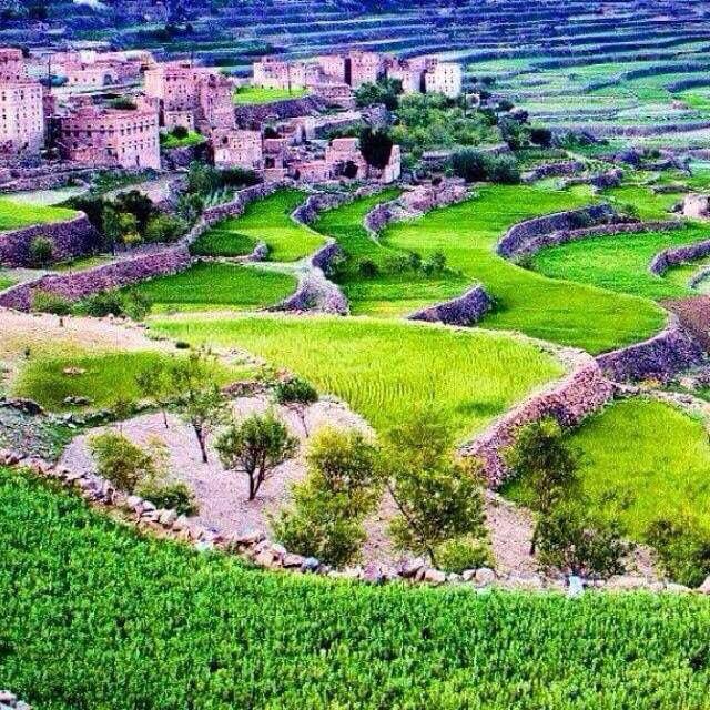صور من بلادي اليمن Golf Courses Yemen Field