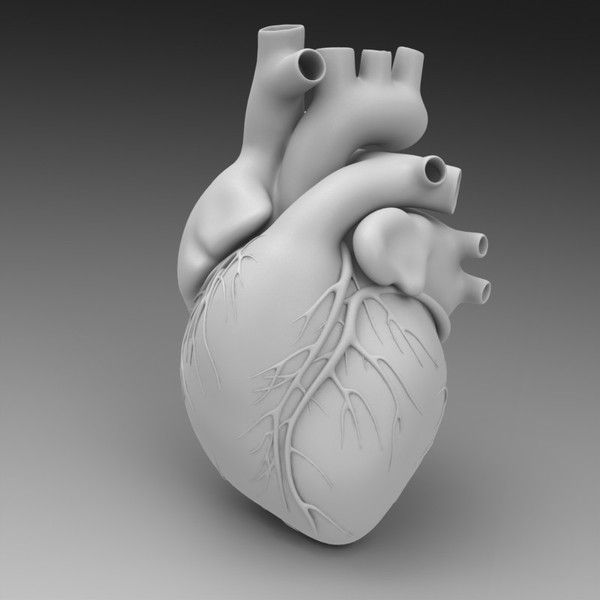 3d model human heart Human Heart... by ID Guy … (With