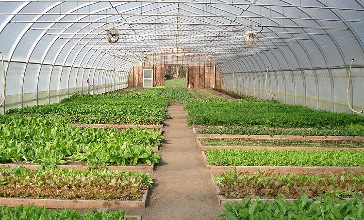 White Gate Farm Greenest Greatest Greenhouse Farming