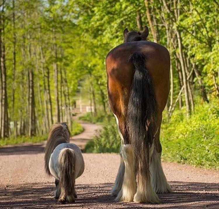 16++ Grosses pferd fuer kinder Trends
