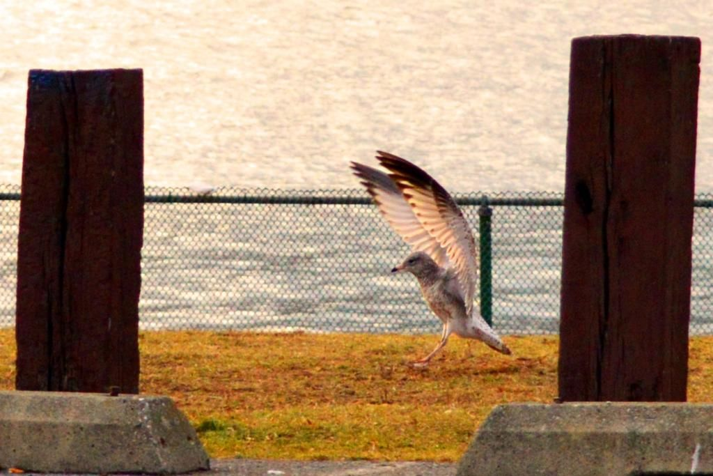 """""""Coming In For A Landing"""" (Kimmy D., 01-13-14)"""