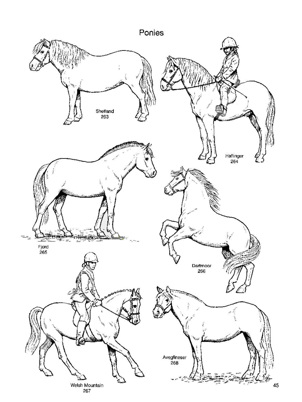 Pony Types Horses Riding School Horsemanship [ 1500 x 1126 Pixel ]