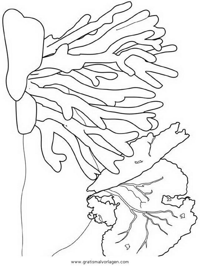 malvorlagen für korallenriffe koralle 14 gratis malvorlage