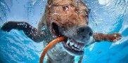 So cool, underwater dogs! Fotos de cachorros embaixo d'água viram livro « Catraca Livre – São Paulo Grátis
