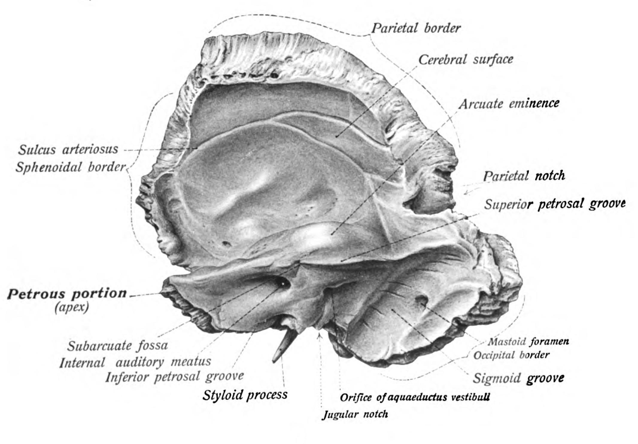 Temporal Bone | B O N E | Pinterest | Anatomía