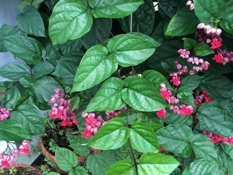 Free Plant Identification Red flowers, Green leaves, Flowers