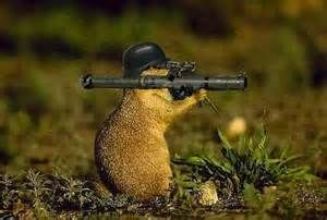 Groundhog - Yahoo Search Results Yahoo Image Search Results
