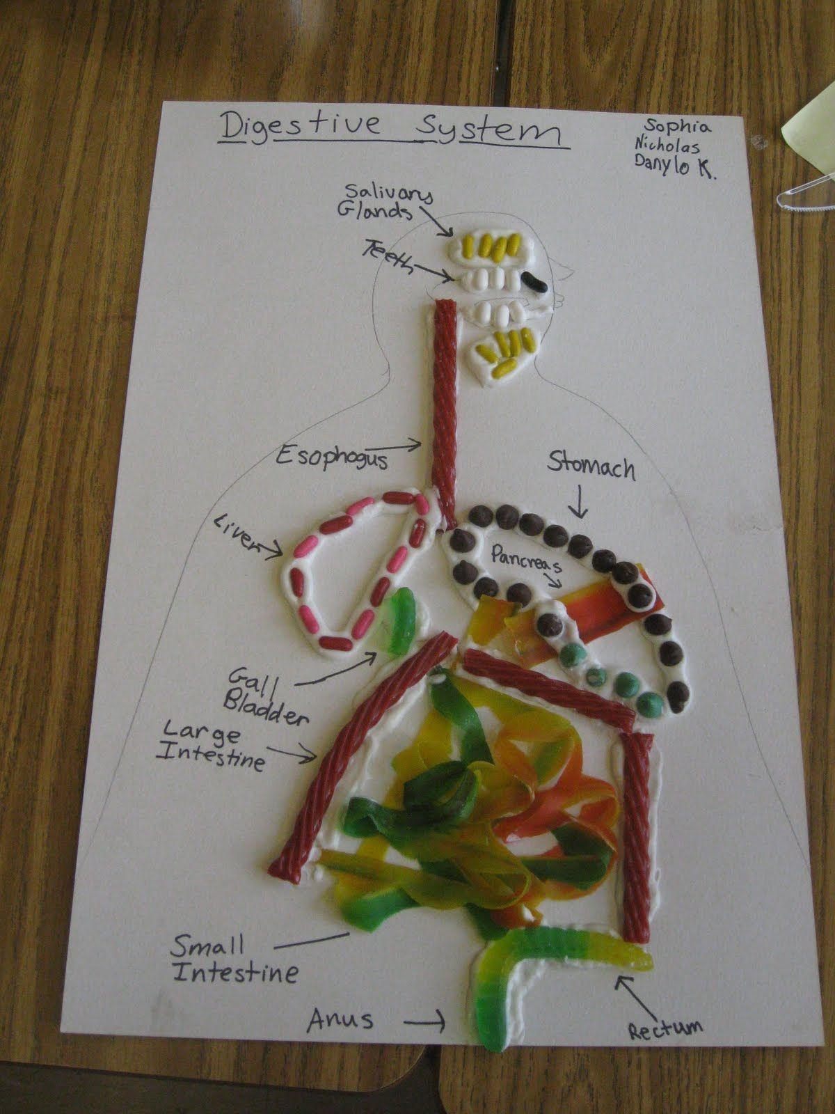 My Science Classroom Edible Digestive Systems