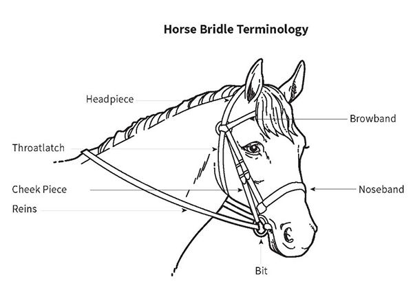 horse bridle diagram and info about buying tack horses. Black Bedroom Furniture Sets. Home Design Ideas