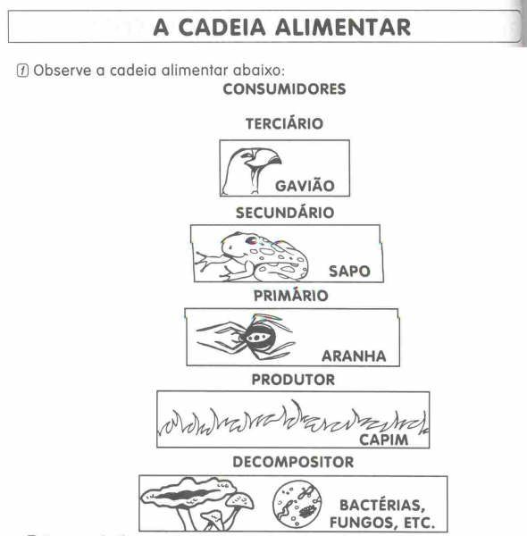 Cadeia Alimentar 30 Exercicios Atividades Desenhos Colorir
