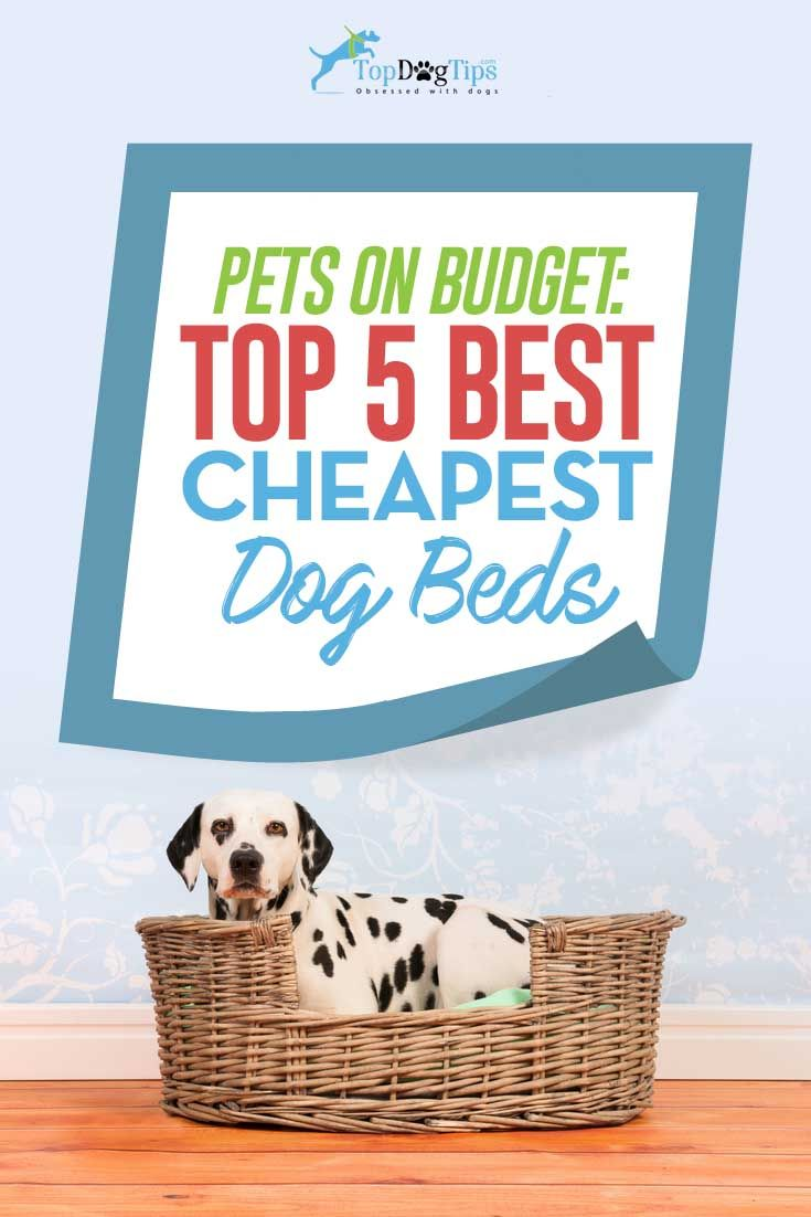 Top 5 Best Cheap Dog Beds Under 20 That Will Last A Long Time Cheap Dog Beds Cool Dog Beds Dog Bed