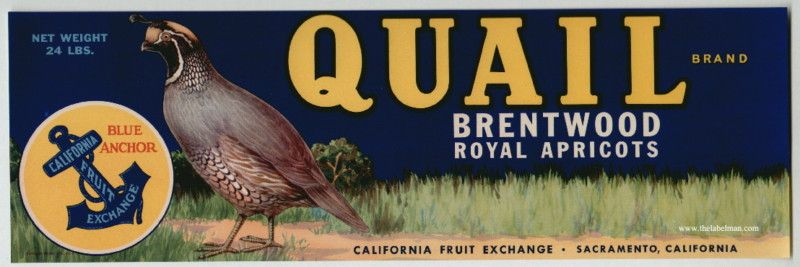 QUAIL Vintage Brentwood California Apricot Crate Label Bird