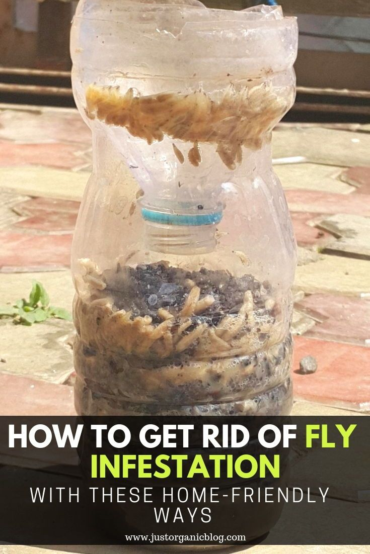 How to get rid of fly infestation with these homefriendly
