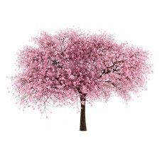 Cherry Tree From Strange S Nursery Tree Drawing Willow Tree Art Ornamental Cherry
