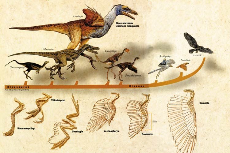 http://www.harunyahya.com/image/kuran_bilime_yol_gosterir/dinosaur_evolution.jpg