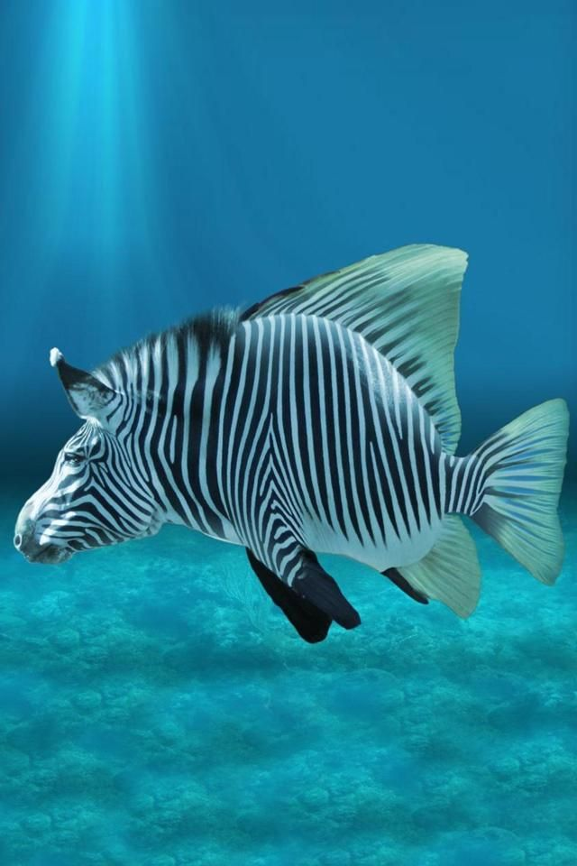 Iphone Zebra Fish Animal Background Tropical Fish Pictures Photoshopped Animals Tropical Fish
