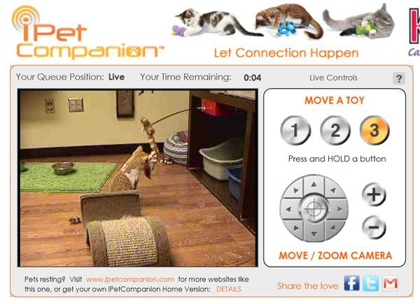 Play With Cats Online Animal Shelter Virtual Room Lets You Cat Online Animal Shelter Cat Shelter