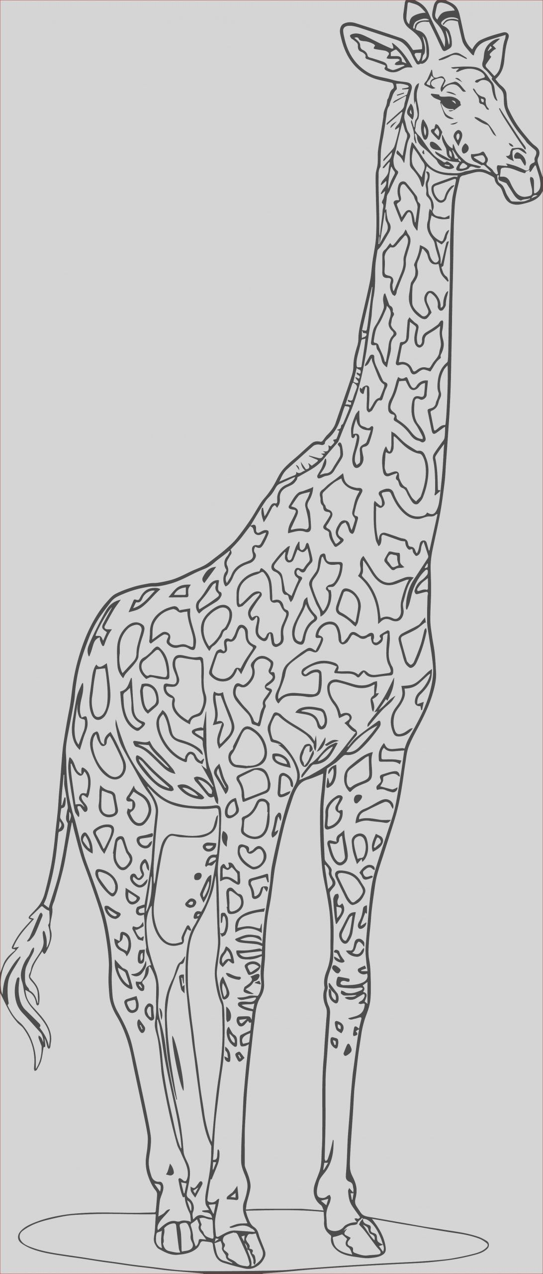 16 Unique Photos Of Girafe Coloring In 2020 Zoo Animal Coloring Pages Giraffe Coloring Pages Animal Coloring Pages