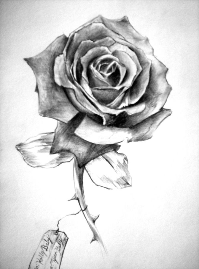Pencil drawing rose with shading this image is more order as the flower has it petals but there could be signs of disorder which would be the thorns