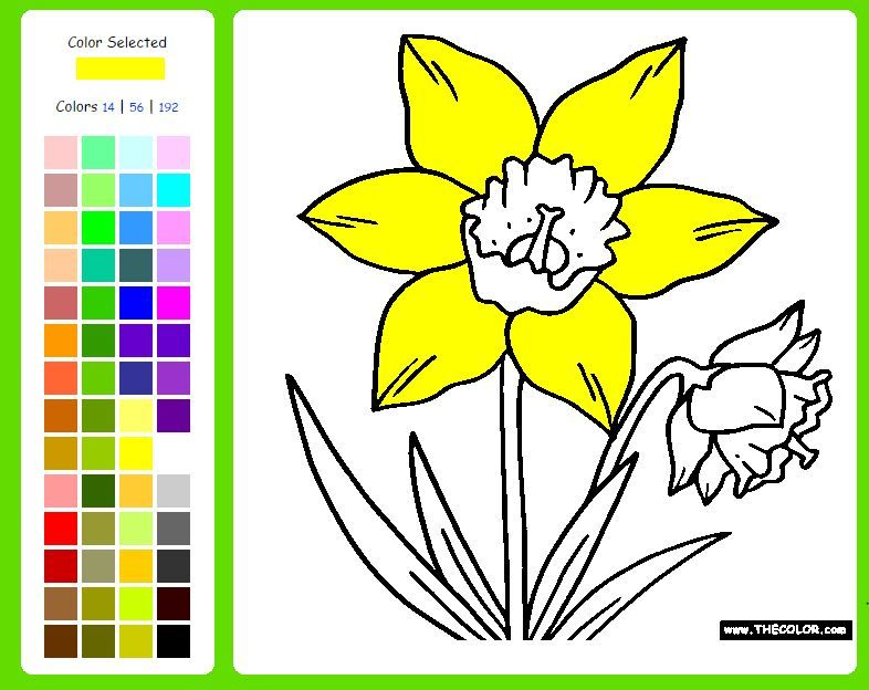 explore daffodil coloring and more