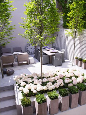 Photo of Green for concrete spaces…painted brick wall, series of boxwood planters…hyd…