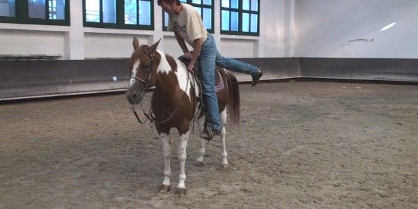 As soon as you put your feet in the stirrup he starts walking. It doesn't have to be like that, here is how to stop a horse from moving while mounting.