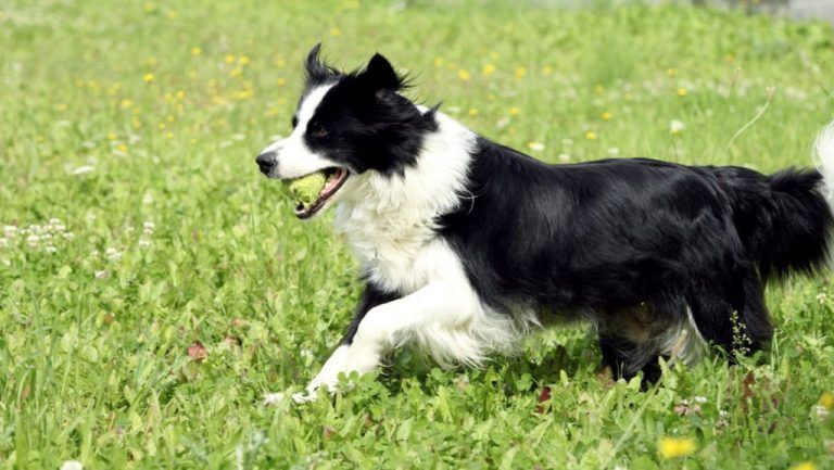 Top 10 Smartest Dogs We Can Aid You Find A Great Pet Coverage Deal
