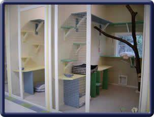 Cat Suites Cat Kennel Cat Hotel Cat Boarding