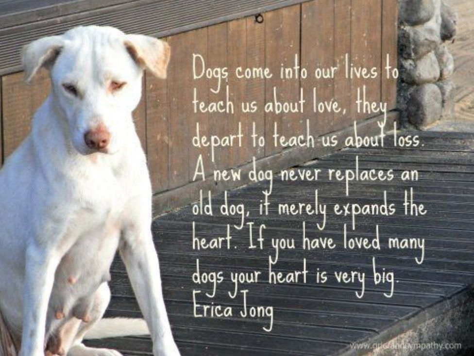 Pin By Shelley Nicholson On To My Hospice Hound Dogs Dog Quotes Pets