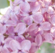 Fleurs Bach Pour Maigrir Yoga