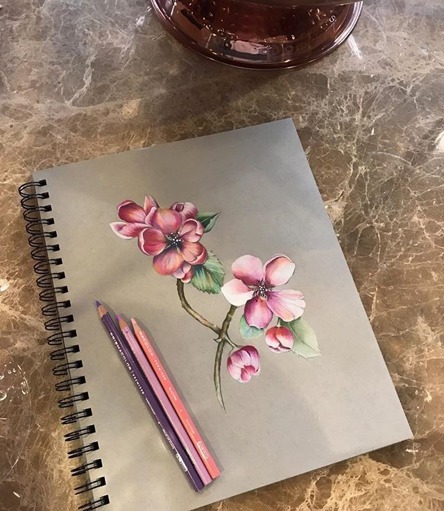 Pin By Katie Novak On Cherry Apple Blossom In 2020 Colored