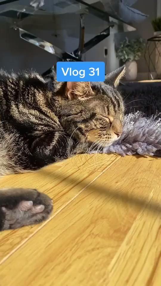 Follow Me on Tiktok for More Lifestyle / Photography Content - #vlog #minivlog #blog #dayinmylife #lifestyle #tiktok #tiktokvideo #tiktokphotographer #photographerlife #coffee #keto #ketolife #tiktokvlog