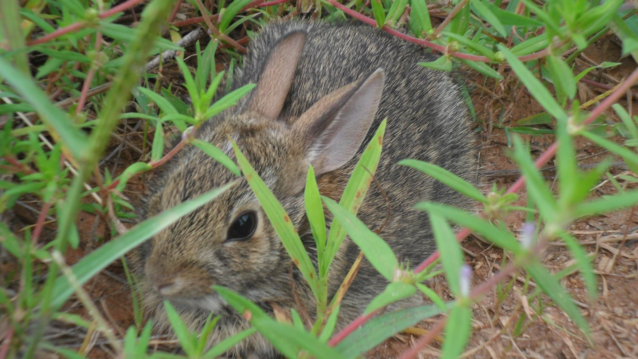 Baby Bunnies In Backyard - House of Things Wallpaper