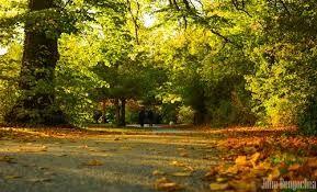 """Résultat de recherche d'images pour """"saint stephen green park dublin autumn"""""""