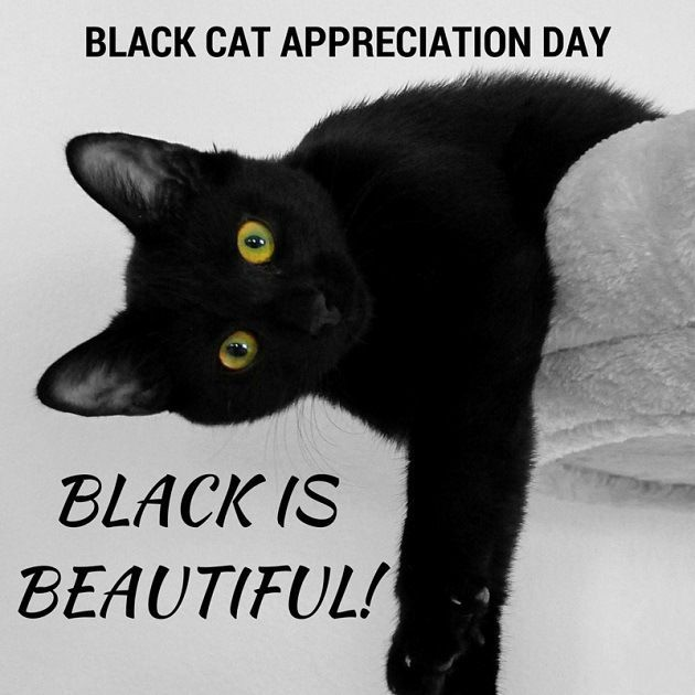 Nov 17 2016 National Black Cat Day Black Cat Appreciation Day Cats Black Cat
