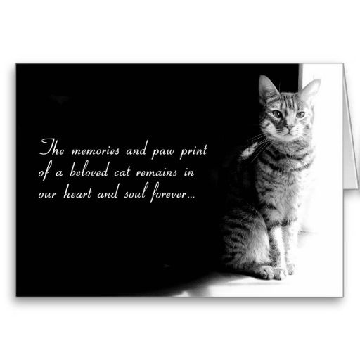 sympathy card for the loss of a beloved pet cat zee zoey s